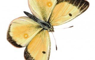 butterfly_matthew_17
