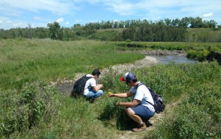 Ant observations in Fish Creek Park