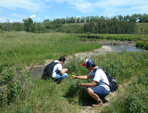 Ants and Plants – Research in Fish Creek Park